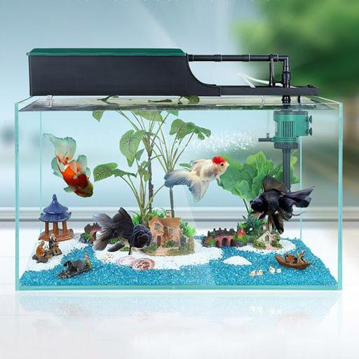 Mua quà sinh nhật cho bố- Bể cá thủy sinh trong nhà